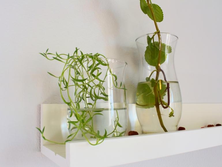 ROOM DECOR - propogated plants.jpg